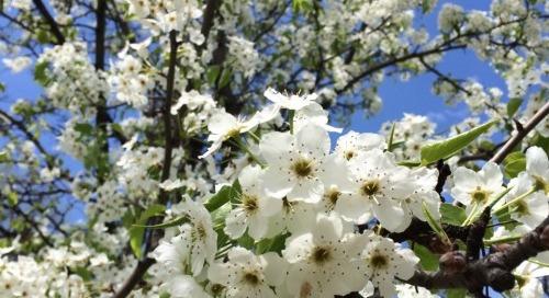 Springtime inspiration.