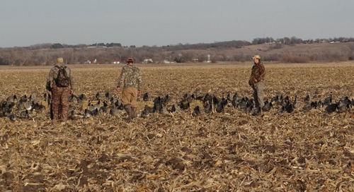 No Water Needed for Hunting Canada Geese