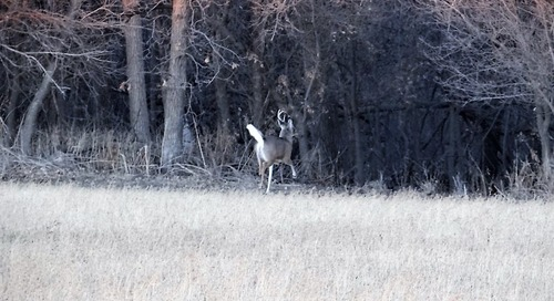 Shed Antlers: Another Reason to Explore Nature in Winter