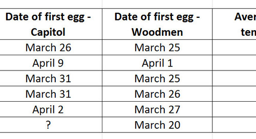 To egg or not to egg, that is the question