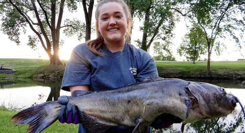 Give CPR to Big Catfish