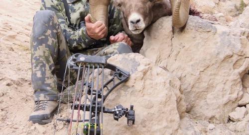 Archery hunter's bighorn sheep likely a Nebraska record