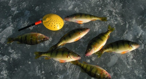 Piles of Panfish