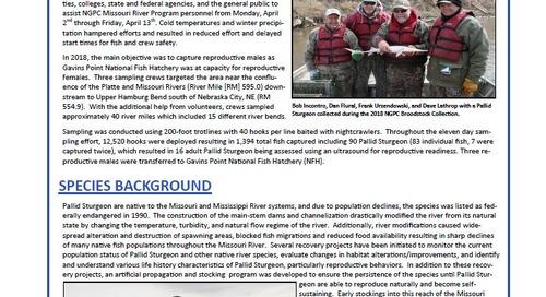 2018 Pallid Sturgeon Broodstock Collection