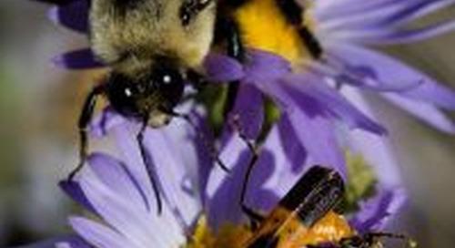 Pollinators all the buzz at Wildcat Hills