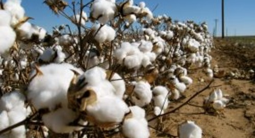 Cotton workers urged to make safety a priority during harvest