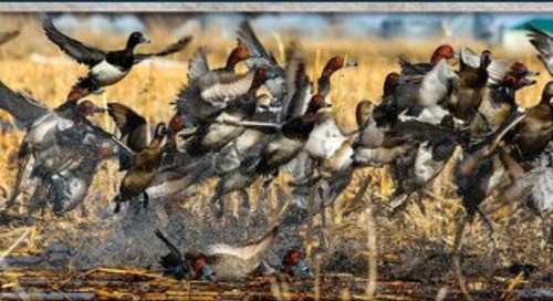 NEBRASKAland Magazine's Waterfowl Hunting Nebraska 2014