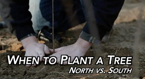 When to Plant a Tree | North vs. South