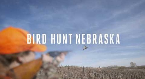 Bird Hunt Nebraska