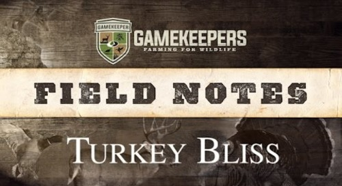 5 Things Wild Turkeys Need On Your Farm | Field Notes