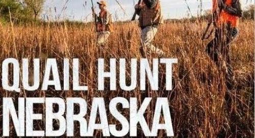 Quail Hunt Nebraska