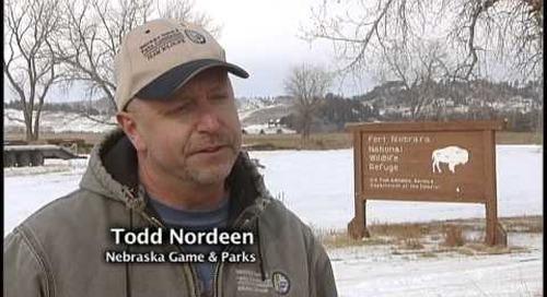 Collaring Nebraska Bighorns and Elk