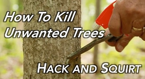 How To Kill a Tree | Hack and Squirt