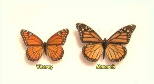 Surveying Butterflies