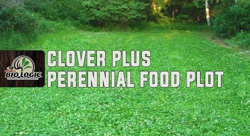 Clover Plus   Perennial Food Plot