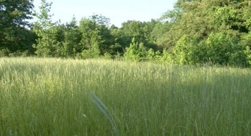 Bedding Cover For Deer and Turkeys - Native Grasses