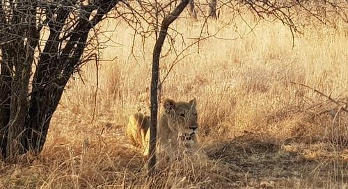 Discovering Pretoria's Dinokeng Reserve