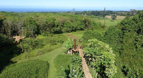 How to Take a Maui Ziplining Adventure